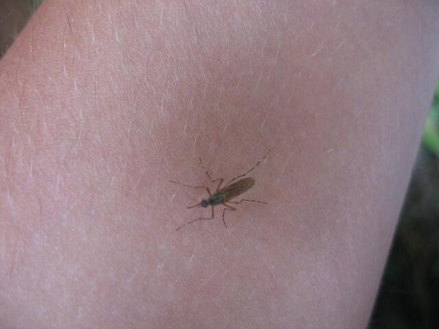 domowy sposób na komary