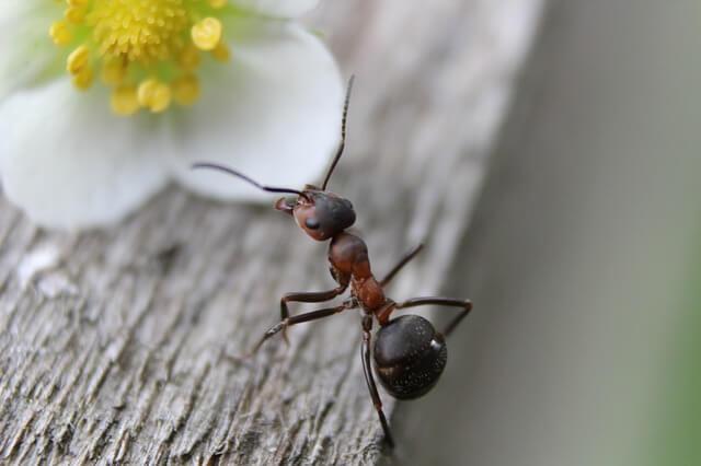 domowe sposoby na mrówki