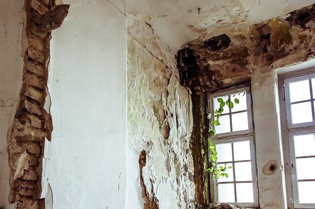 Jak usunąć pleśń ze ściany ? Domowe sposoby