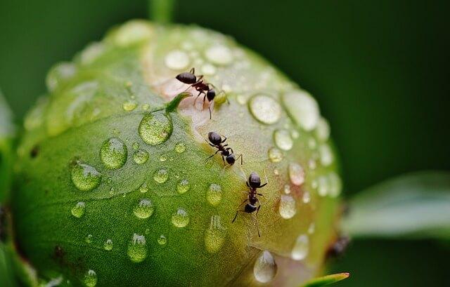 Co jest dobre na mrówki ? Domowe sposoby